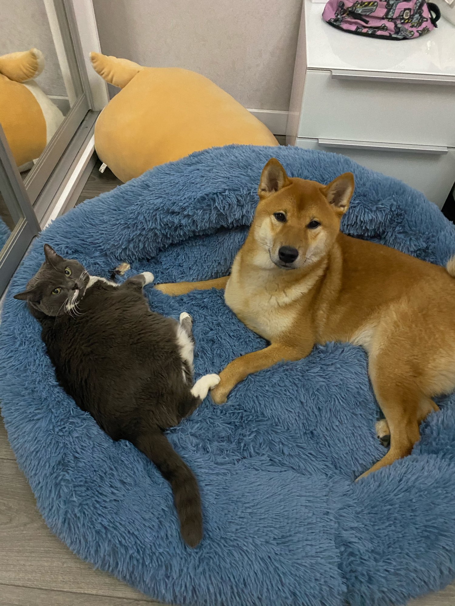 Warm and super soft dog bed, fuzzy winter cat bed, fluffy and cozy
