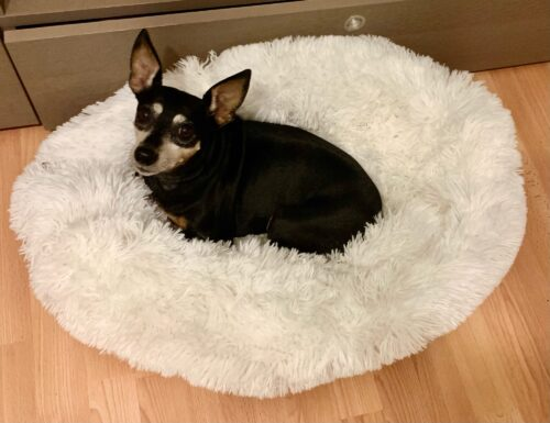 Warm and super soft dog bed, fuzzy winter cat bed, fluffy and cozy photo review